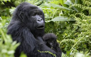 3 Days Gorilla Tracking Mgahinga National Park