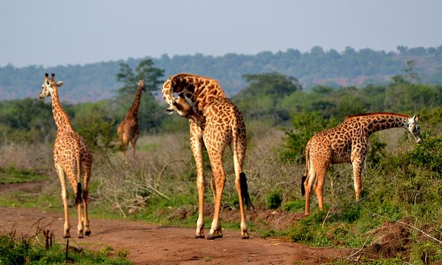 3 Days Akagera National Park Rwanda Wildlife Safari