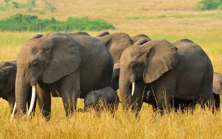 4 Days Honeymoon Safari in Uganda
