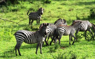 4 Days Lake Mburo Bwindi Jungle Tour