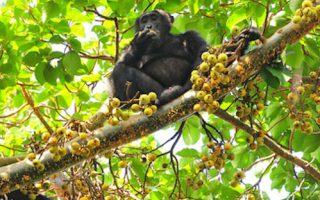 6 Days Uganda Primates Safari