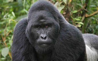 9 Days Uganda Primates Safari