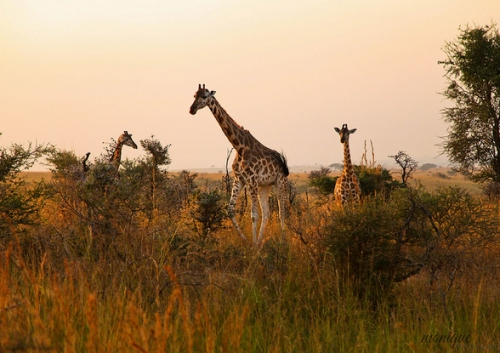 3 Days / 2 Nights Queen Elizabeth National Park Safari